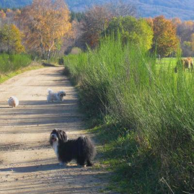 Promenade campagnarde