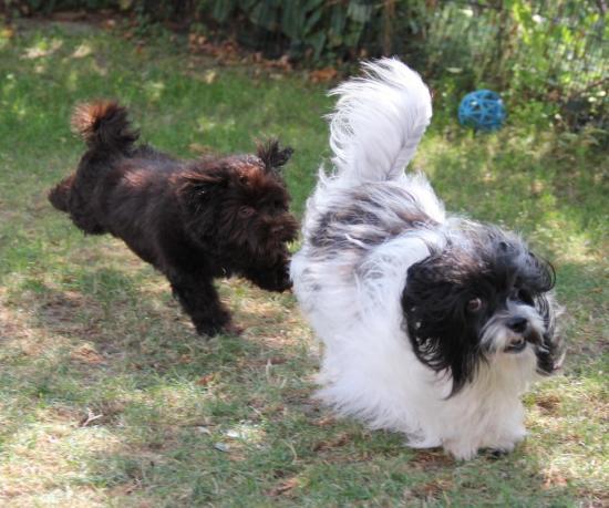 Zoé et Nina sept 2012