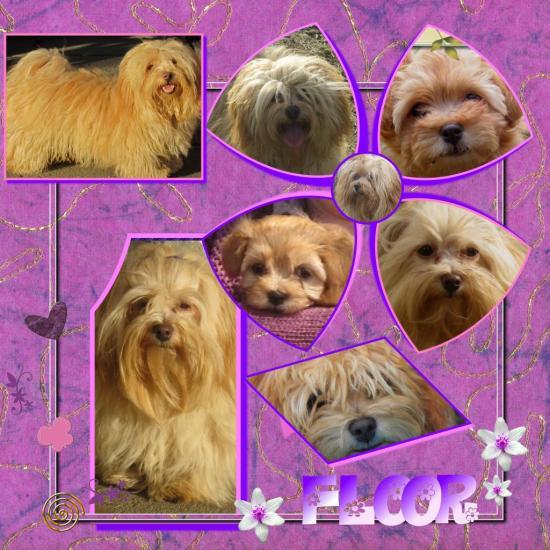 floor-2011.jpg