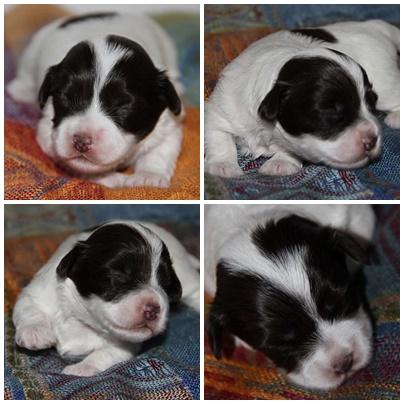 Lola2