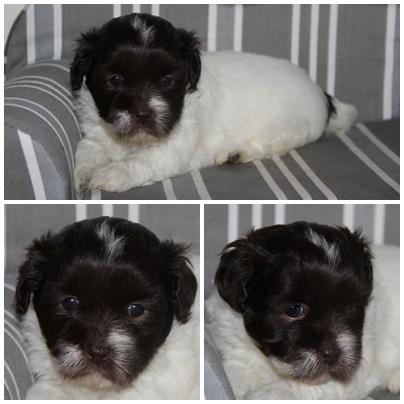 Ollie 1 mois