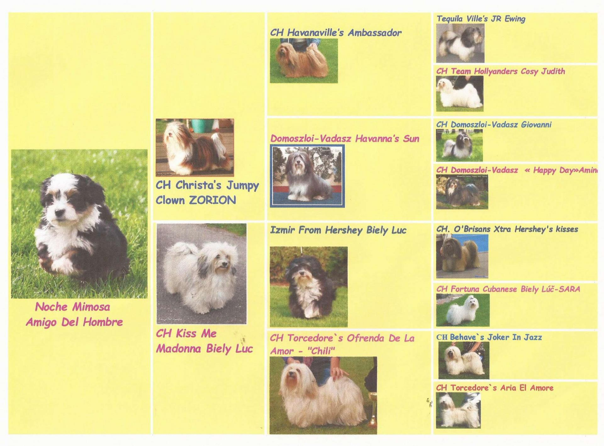 Pedigree en image 1