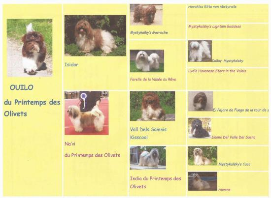 Pedigree en image 3
