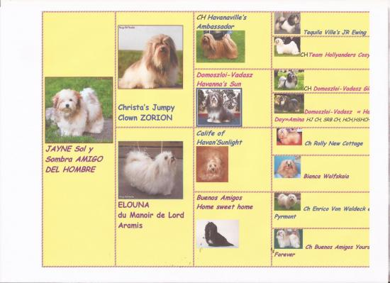 Pedigree en images