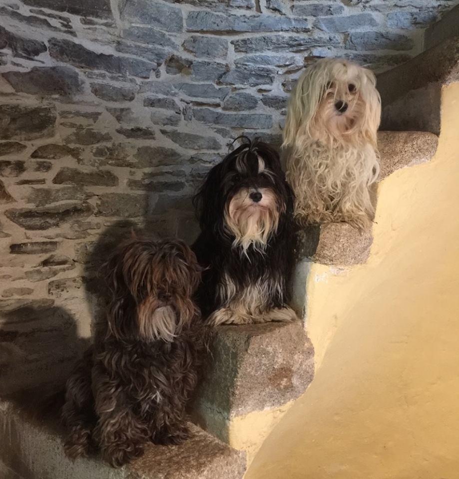 Trio zoe